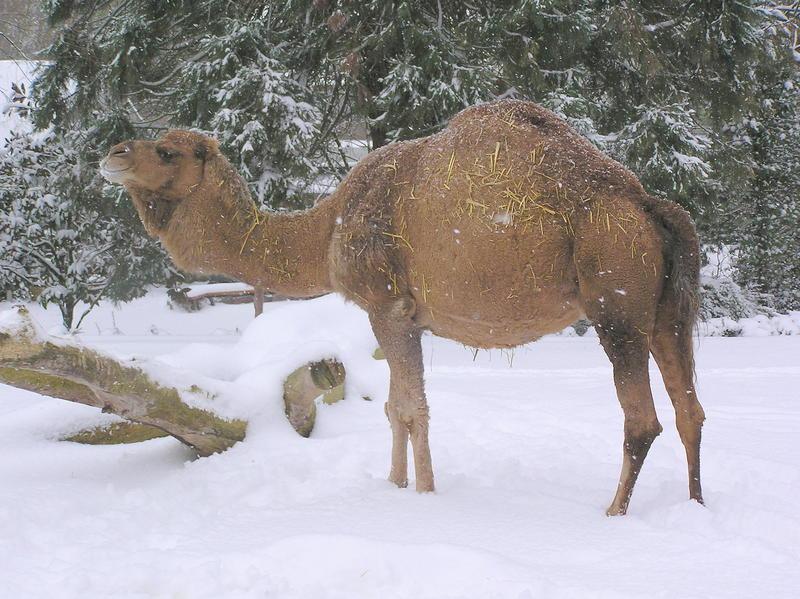 Adventsuberraschungen Geschenke Basteln Und Tiere Hautnah Erleben