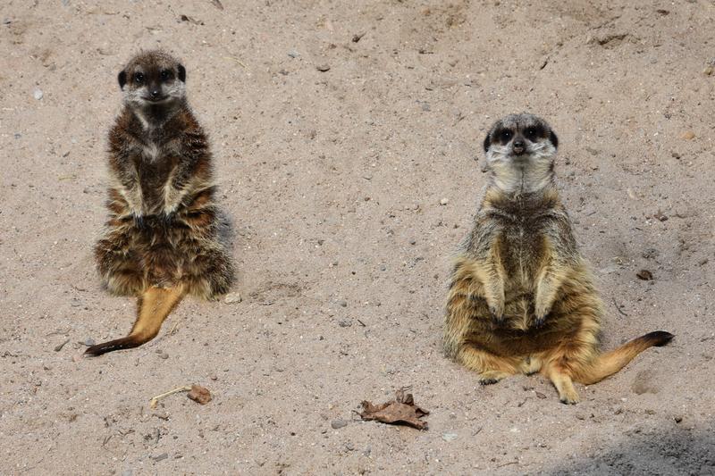 """""""Tiere erleben im Landauer Zoo"""": Forum Demenz lädt zu gemeinsamer Entdeckungsreise"""
