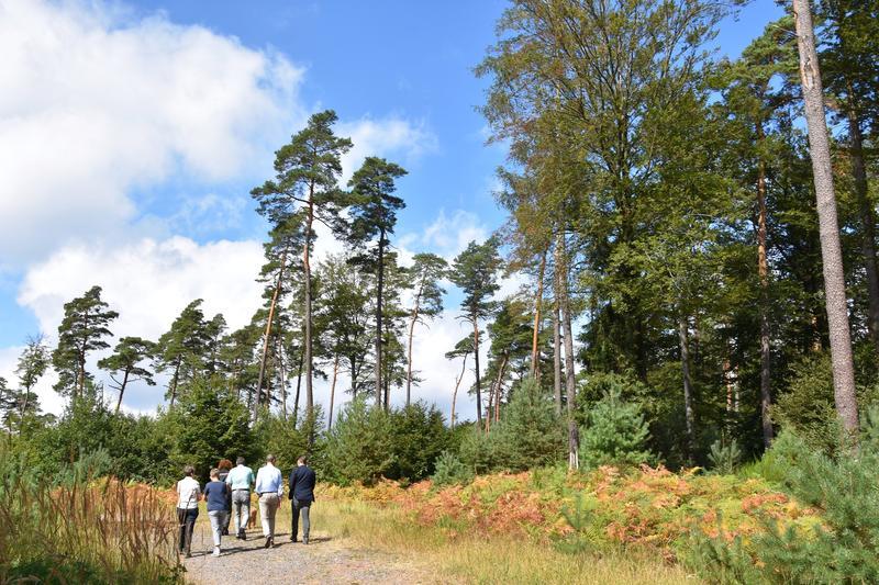 Am Samstag, 14. September, können sich interessierte Bürgerinnen und Bürger gemeinsam mit OB Thomas Hirsch ein Bild vom Zustand des Landauer Stadtwalds machen.