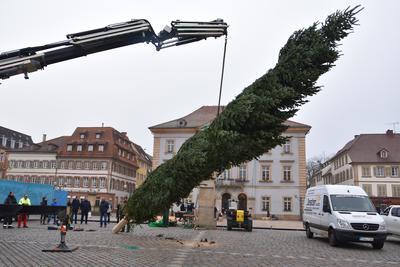 Kommt eine Nordmanntanne geflogen: Der weithin sichtbare, 13 Meter große Baum ist das Herzstück des Kunsthandwerklichen Thomas-Nast-Nikolausmarkts in Landau.