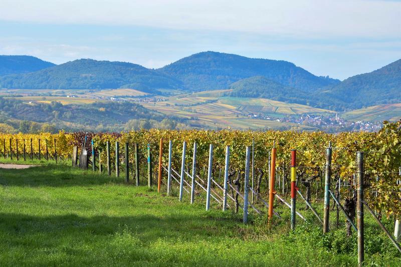 """Malerische Weinregion: Die Stadt Landau begleitet in diesem Jahr erstmals die Veranstaltungsreihe """"Night of the Proms"""" mit ihren Erzeugnissen."""