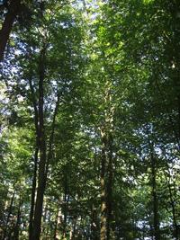 Stadtwald (Quelle: Stadtverwaltung)